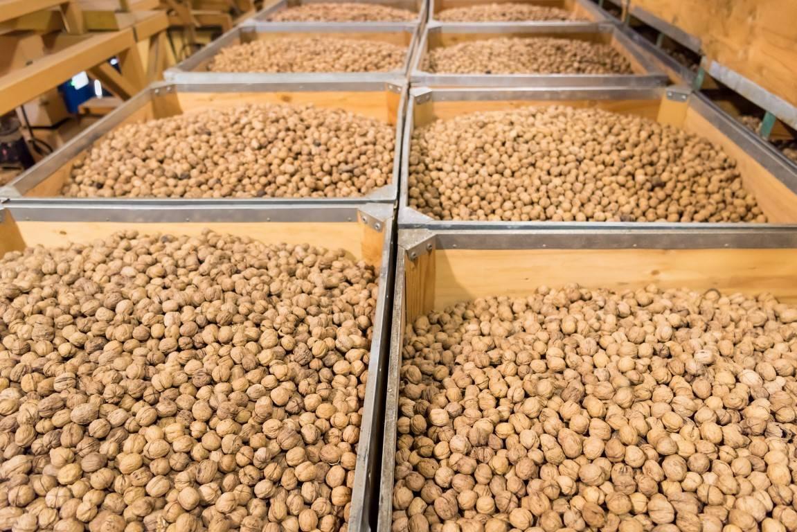 Как правильно хранить очищенные грецкие орехи в домашних условиях: сортировка, где держать, можно ли замораживать?