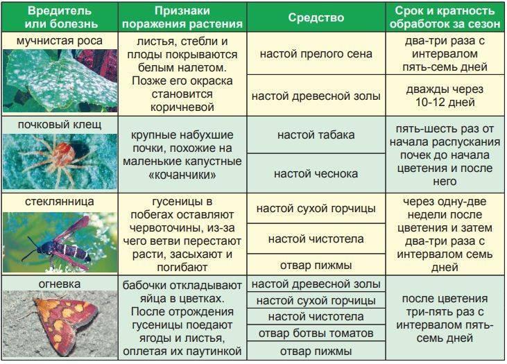Миндаль: посадка, выращивание, уход. наш опыт - огород, сад, балкон - медиаплатформа миртесен