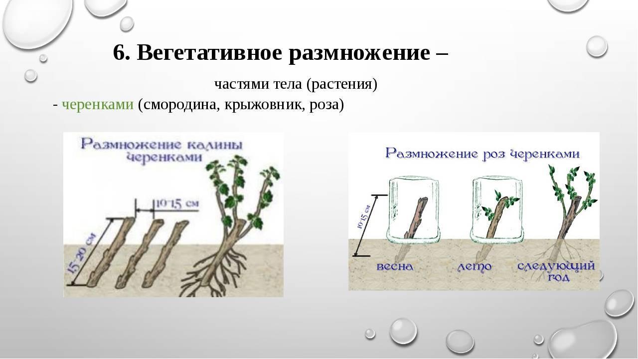 Размножение цветов: полезные советы | good-tips.pro