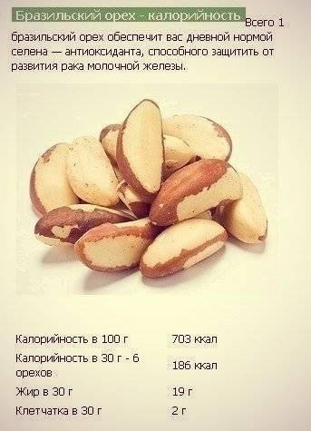 Бразильский орех - полезные свойства и противопоказания | про орехи