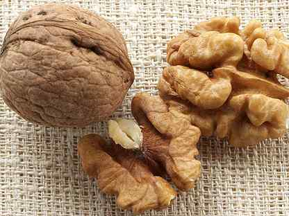 Заболевания грецкого ореха. опасные болезни и вредители грецкого ореха чем обработать грецкий орех от болезней - электричество