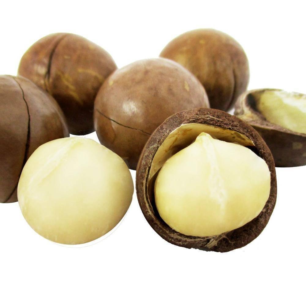 Скорлупа ореха макадамия — полезные свойства и применение