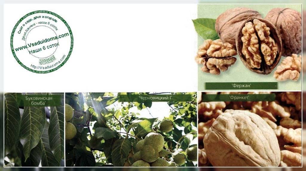 Как смотриться цвет мебели орех в интерьере? обзор с красным оттенком и шоколадный -итальянский-испанский-миланский. какой выбрать? обзор +видео