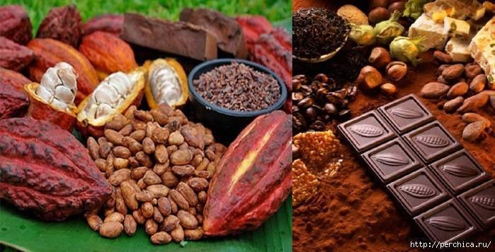 Польза и вред какао порошка для здоровья, пить или не пить