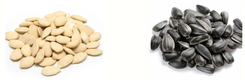 Семечки подсолнуха, польза и вред «толстеют ли от семечек подсолнуха?»