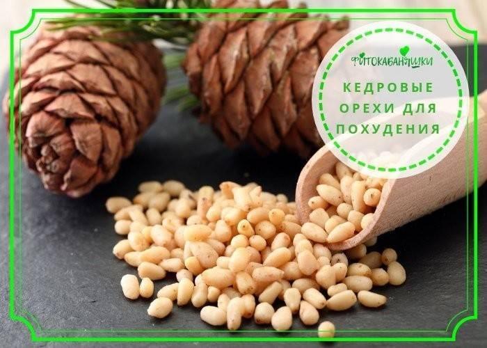 Кедровые орехи детям: с какого возраста ребёнку можно есть орешки, польза и возможный вред