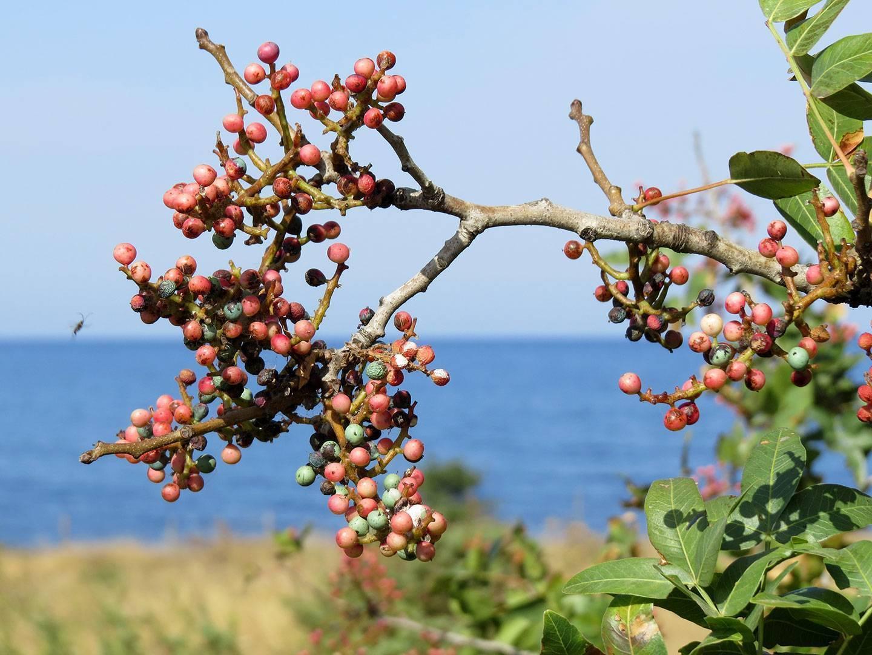 Растения крыма: названия, фото и описание — природа мира