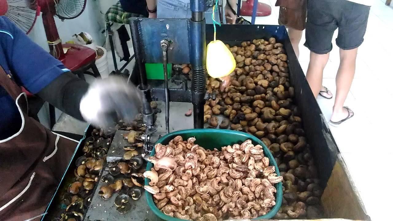 Как мыть грецкие орехи: как правильно обеззаразить перед употреблением очищенные и в скорлупе, а также плюсы и минусы разных способов обработать плоды