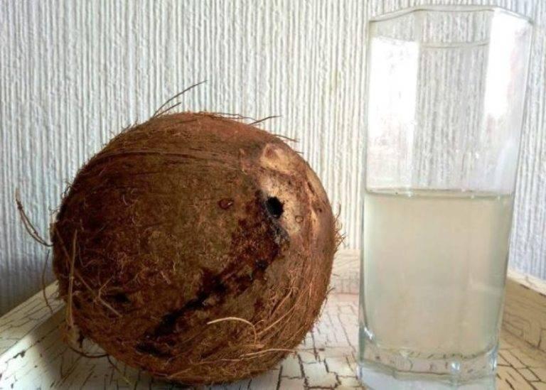 Польза и вред кокосовой стружки для организма | польза и вред