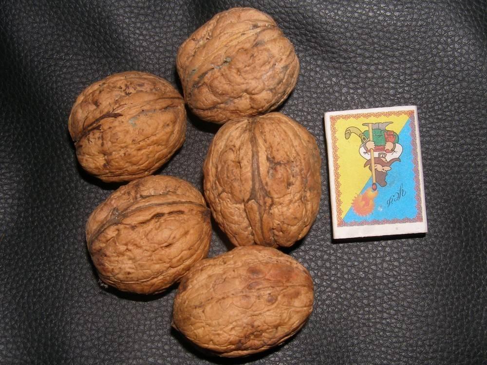 """Сорта грецких орехов: фото, описание. грецкий орех: сорт """"идеал"""""""