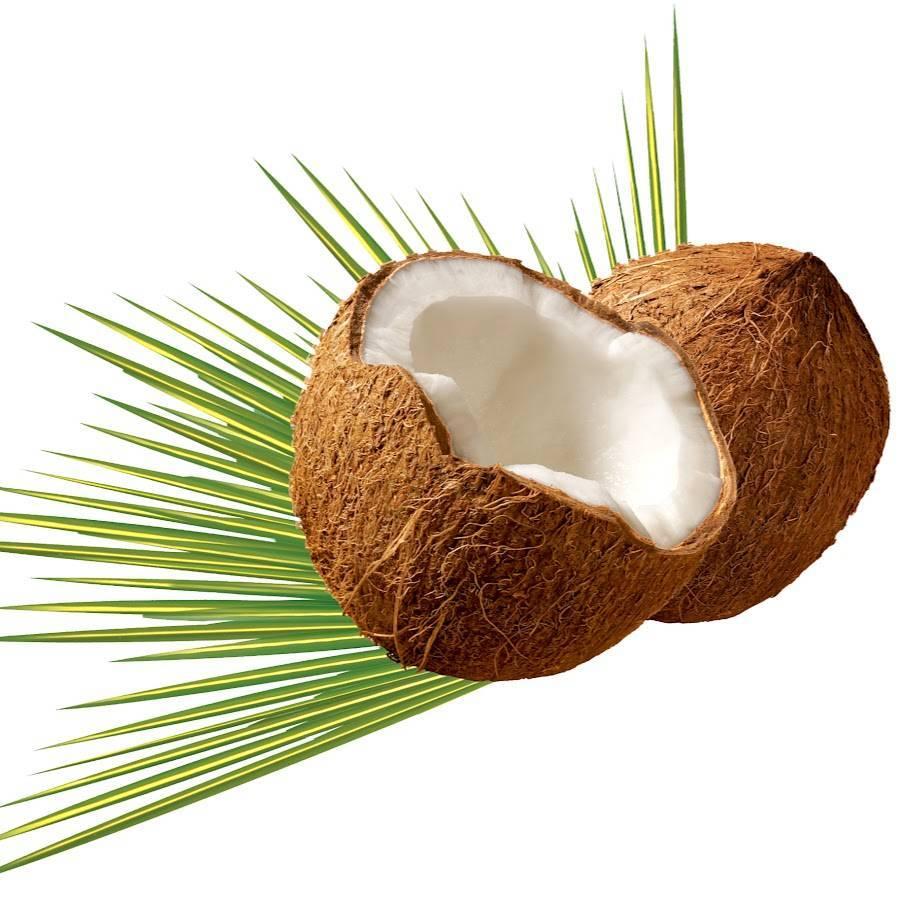 Где и как растут кокосы