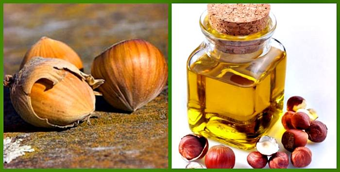 Польза фундука для организма: применение ореха и масла на его основе - red fox day