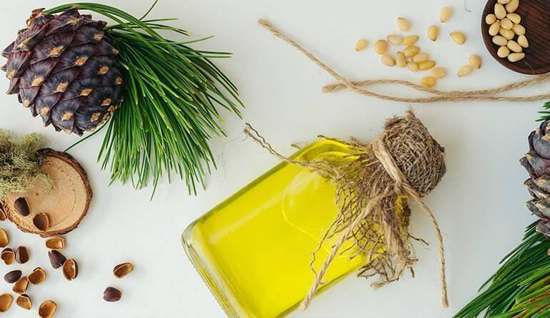 Кедровая живица: лечебные свойства и противопоказания, применение, отзывы