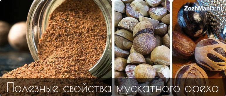 Мускатный орех - применение, полезные свойства и противопоказания. польза и вред для мужчин, женщин