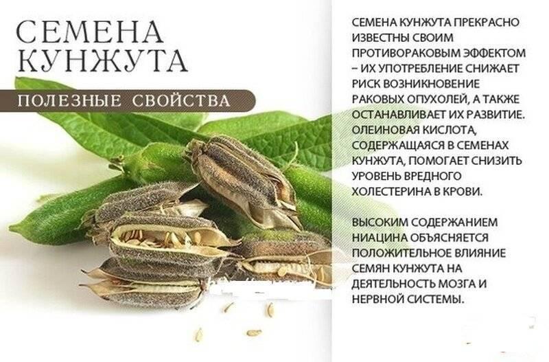 Чем полезны семечки кабачка и есть ли противопоказания