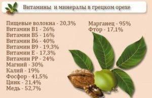 Через сколько лет орех дает плоды