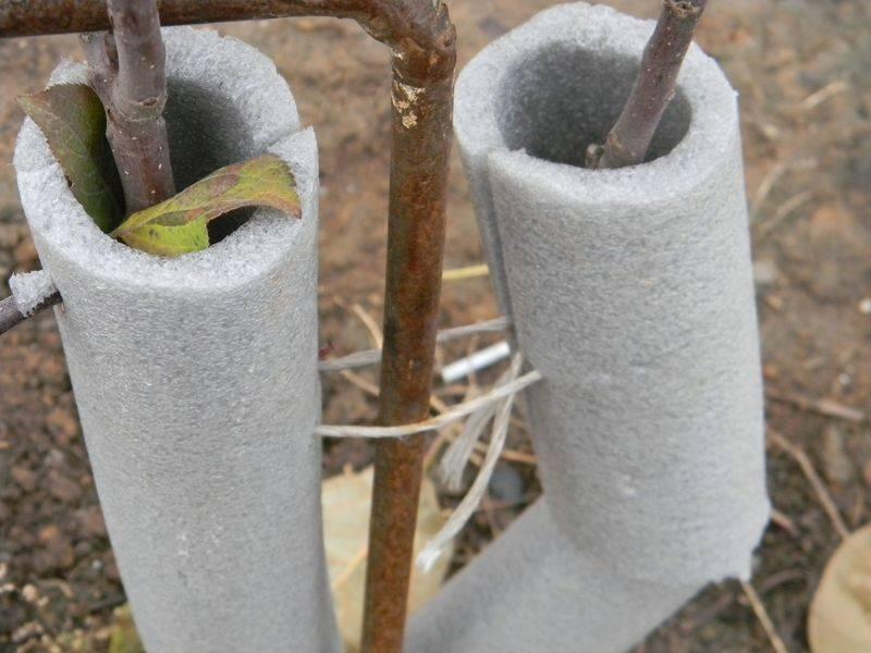 Осенняя подготовка деревьев в саду к зиме