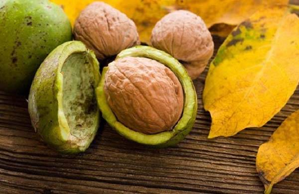 На грецких орехах точки и пятна: почему плоды на дереве темнеют внутри и снаружи, можно ли есть орешки, которые почернели, и как решить проблему?