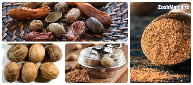 Мускатный орех: польза и вред для организма