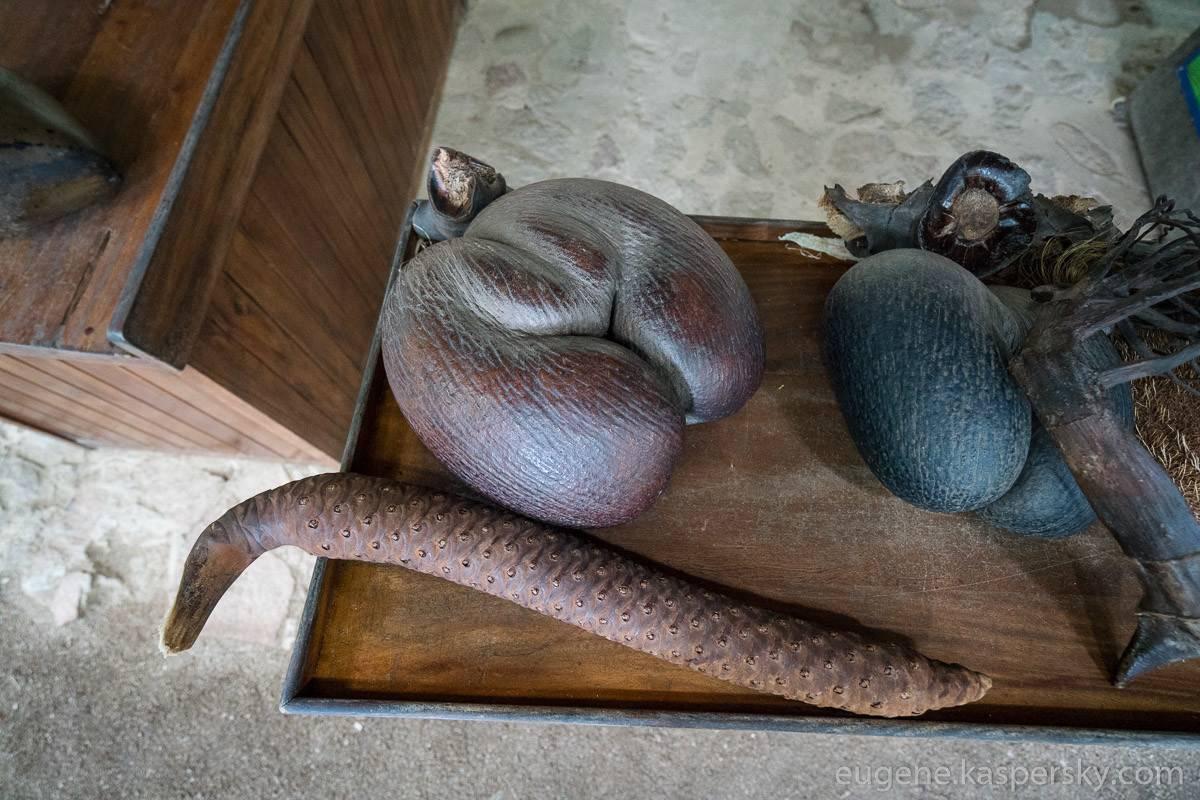 Сейшельский орех (морской кокос, коко де мер, мальдивский орех)