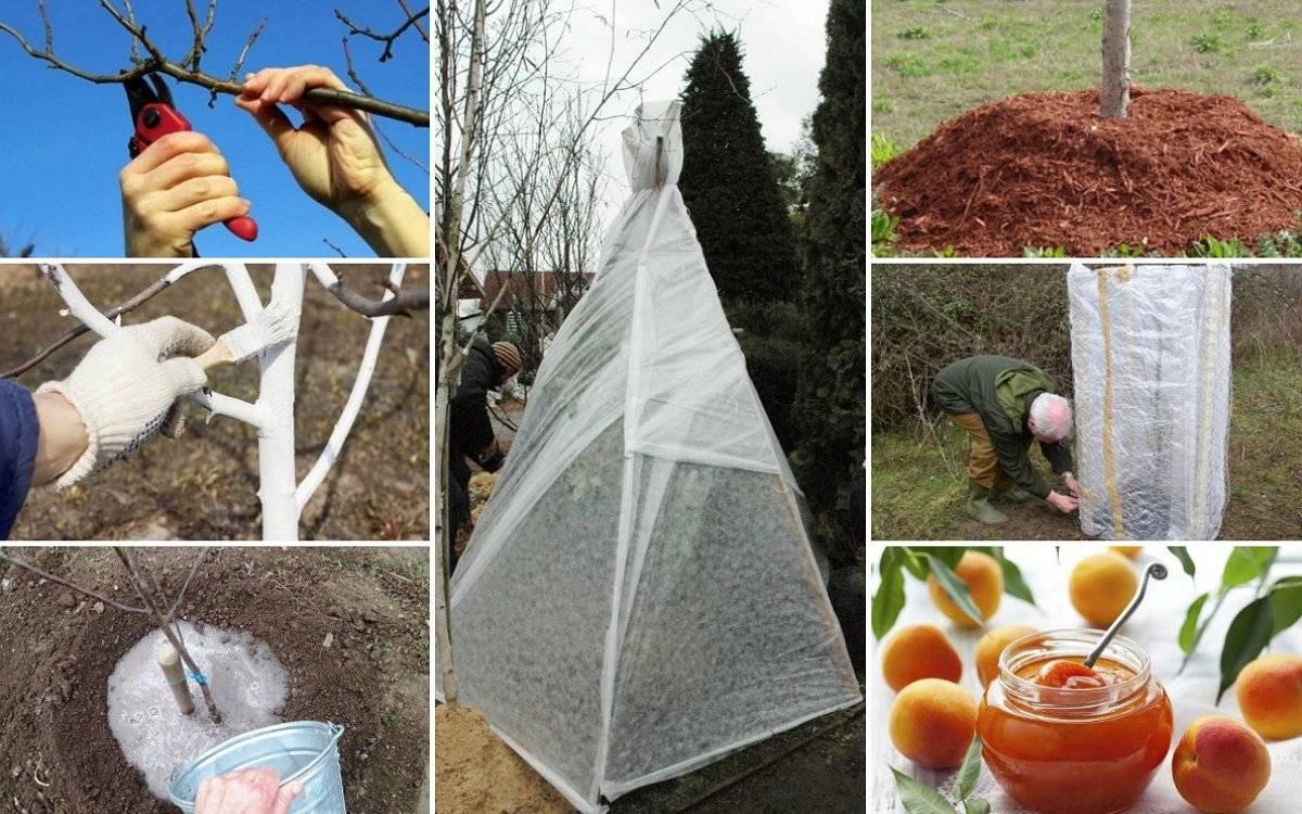 Как и чем утеплить деревья на зиму: молодые, взрослые и саженцы деревьев