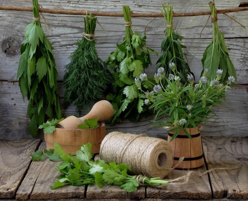 Какие приправы добавляются при квашении капусты