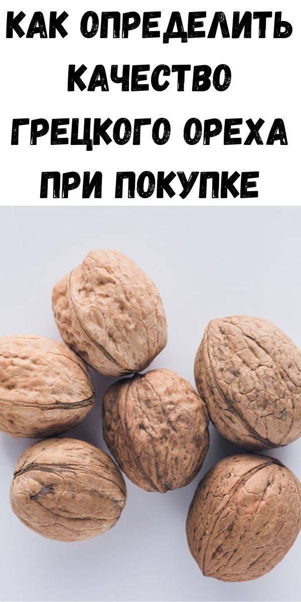Как правильно собирать грецкий орех