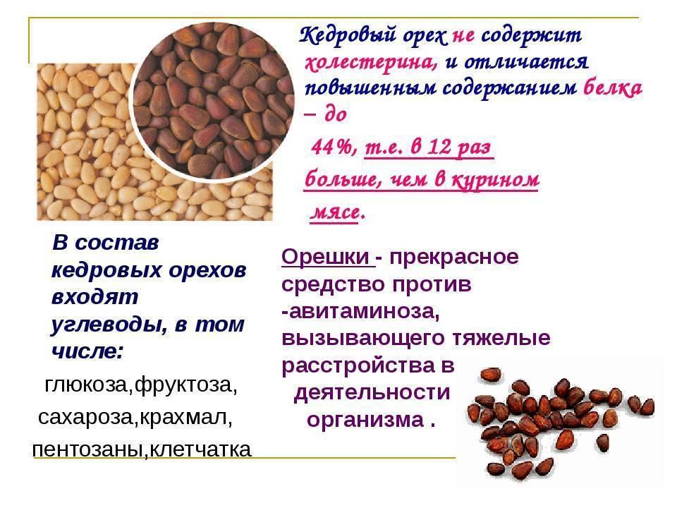 Кедровые орехи польза и вред для организма, полезные свойства и противопоказания