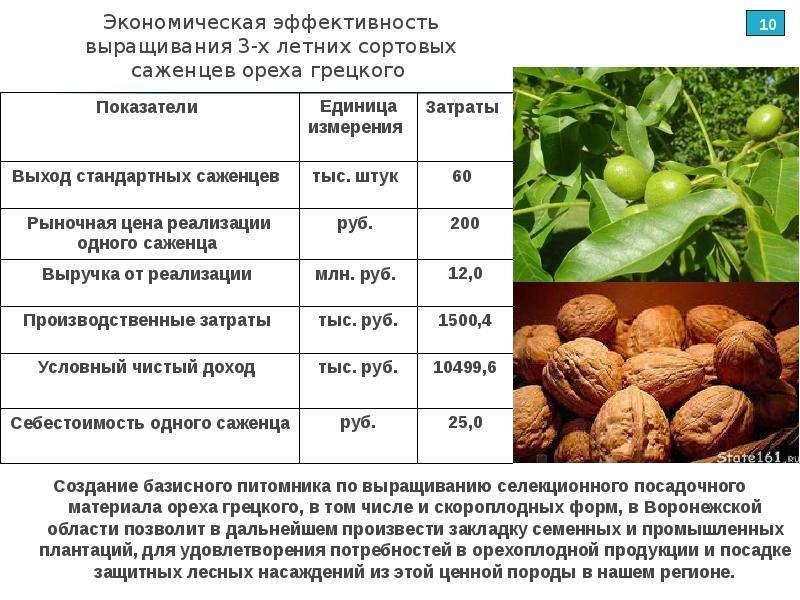 Саженцы грецкого ореха: особенности выбора и ухода