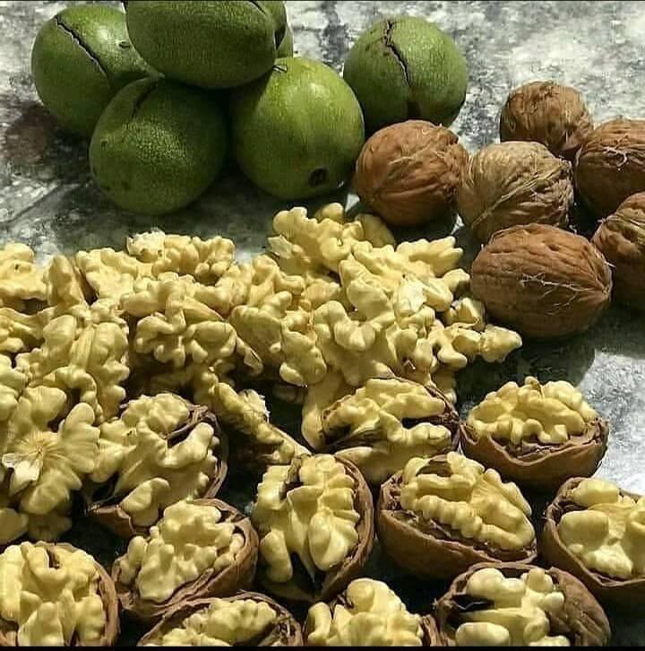 Выращивать грецкий орех в казахстане - не экзотика — портал ореховод