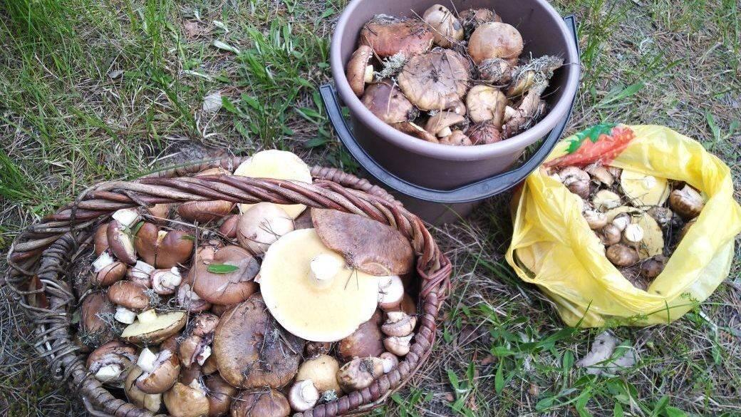 Как мариновать белые грибы на зиму в банках – 5 рецептов