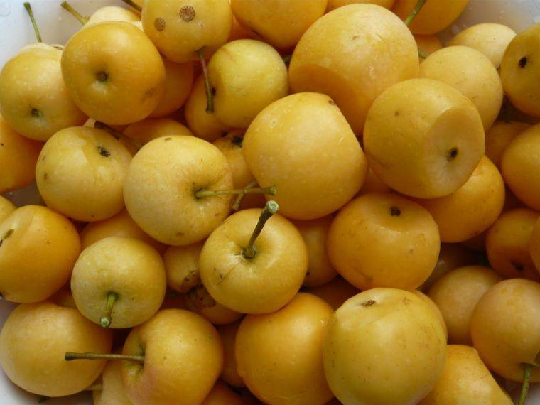 Моченые яблоки в домашних условиях: простые рецепты