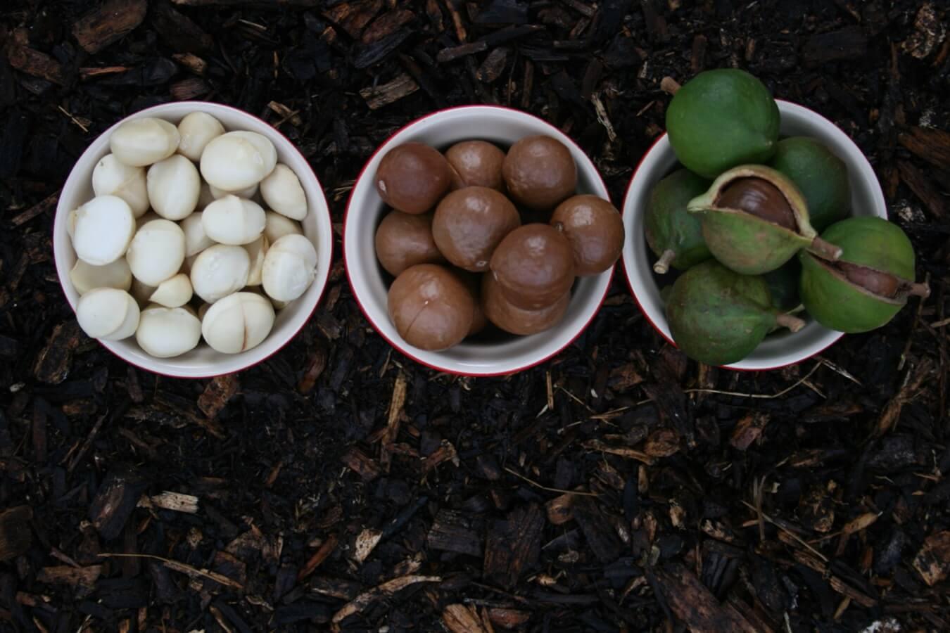 Орех макадамия — польза и вред, полное описание сладкого ореха, калорийность, виды, фото, видео, отзывы