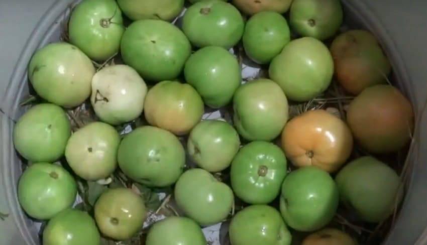 Как на зиму засолить помидоры в ведре: особенности засолки зелёных помидор в ведре, лучшие рецепты и советы