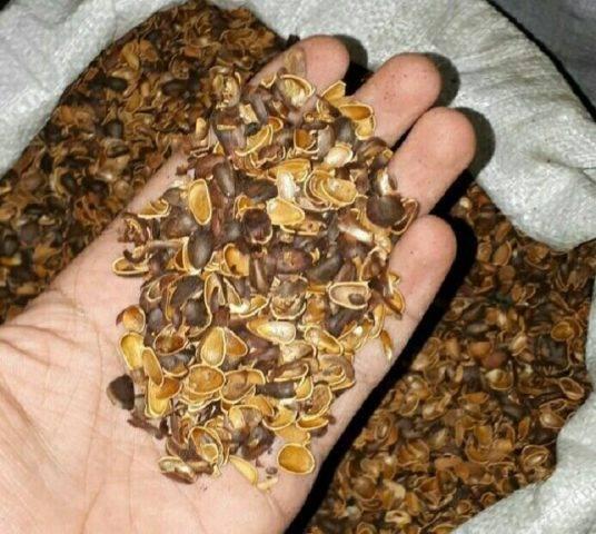 Кедровые орехи - польза и вред для организма, лечебные свойства масла, настойки или ядер