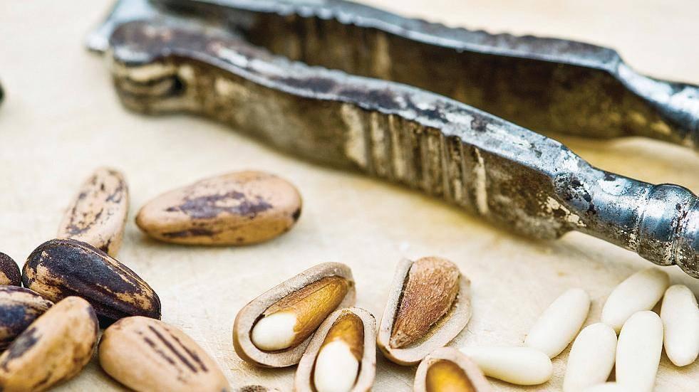 Буковый орех (чинарик) — описание, полезные и вредные свойства, состав, калорийность, применение, фото