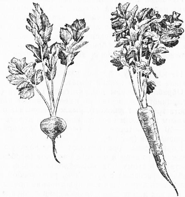 Госты: белые коренья петрушки, сельдерея и пастернака сушеные, гост 16731-71