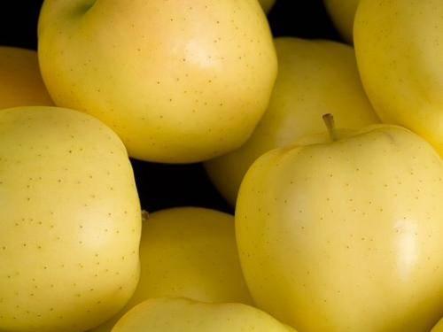Яблоко | темные начала вики | fandom