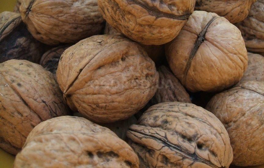 Лещина или лесной орех