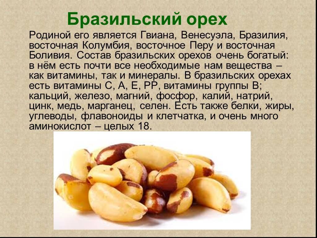 Орехи: польза и вред для организма мужчин и женщин