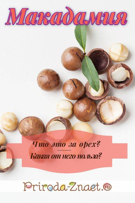 Орех макадамия: польза и вред для организма, сколько нужно съесть