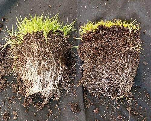 Микоризы: природные биоудобрения почв
