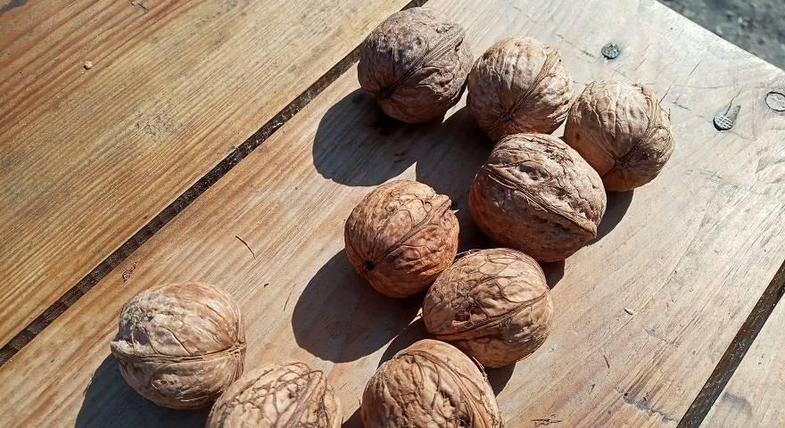 Как и когда собирать грецкие орехи: советы, рекомендации, тонкости