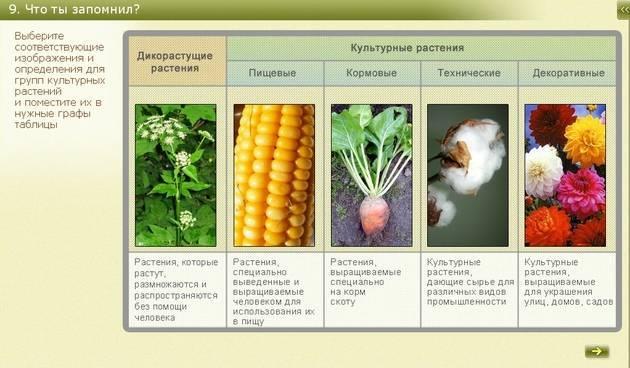 Описание грецкого ореха чандлер, выращивание и тонкости ухода
