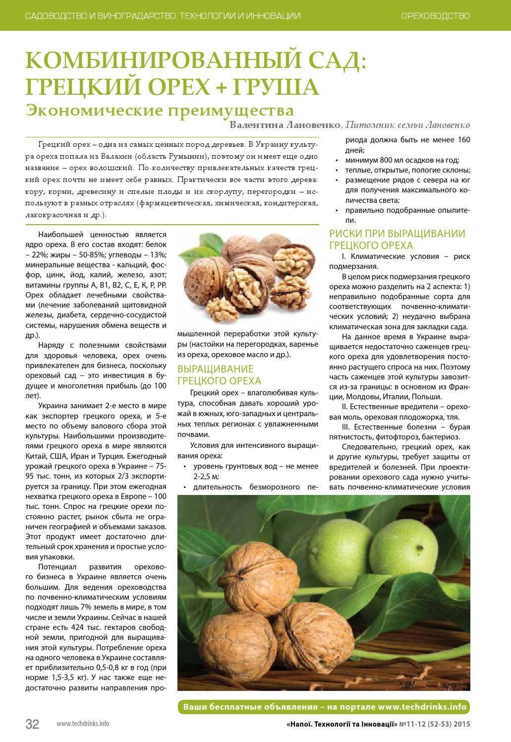 Бизнес на переработке грецкого ореха (декабрь 2020) — vipidei.com