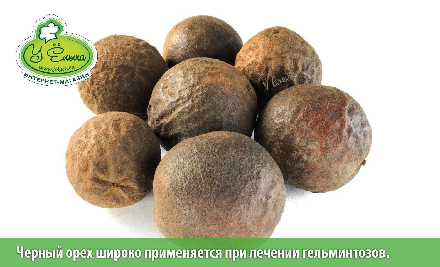Черный орех: полезные и лечебные свойства, противопоказания и применение
