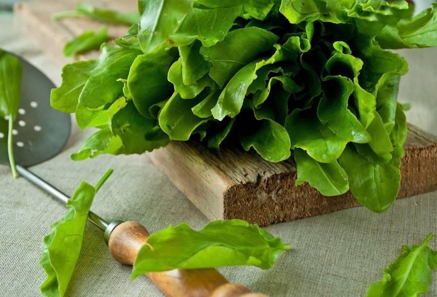 Как заготовить шпинат на зиму в домашних условиях: простые рецепты приготовления, включая заморозку и засолку