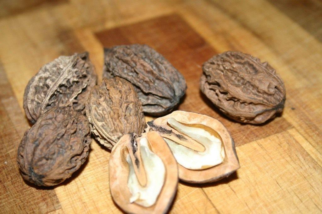 Маньчжурский орех на дачном участке. посадка, уход, выращивание. фото — ботаничка.ru