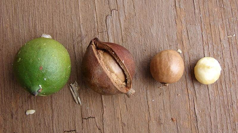 Почему орех пекан сладкий на вкус и похож ли на другие орехи?