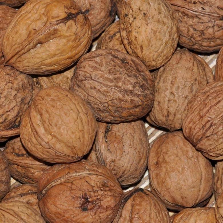 Выращивать грецкий орех в казахстане - не экзотика